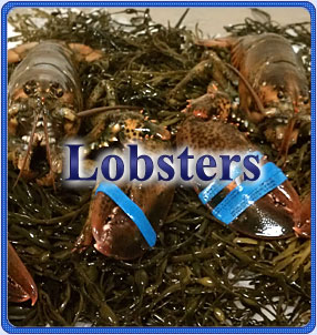 Lobster Program